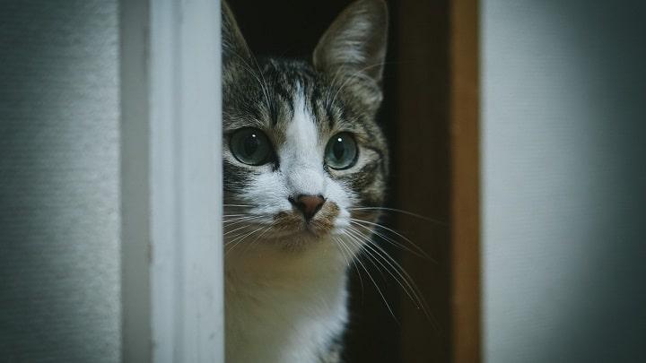 アイキャッチ 猫